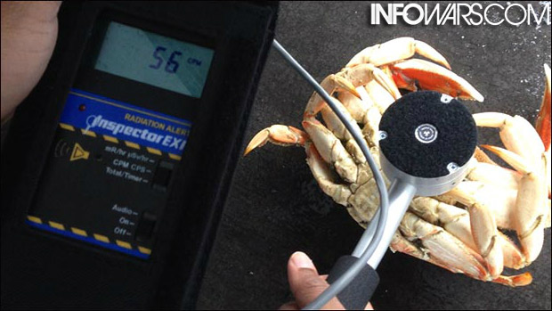 Fresh crab purchased in Crescent City, California read in at 56 CPM, higher than normal levels for the region.