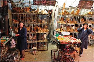 Live chicken market in Xining, Qinghai province, China.