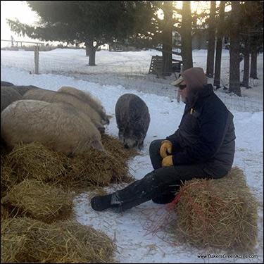 Mark Baker and his pigs / Image via: BakersGreenAcres.com