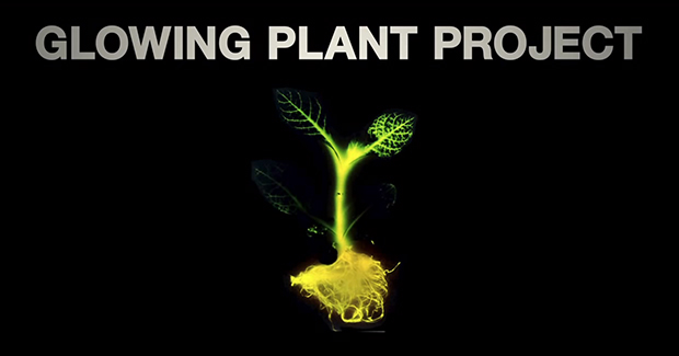 glowplant