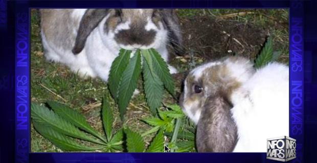 DEA Raids Stoner-Bunny's Stash