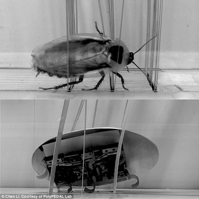 Terrifying Cockroach Bot Can Squeeze Through Tiniest of Gaps