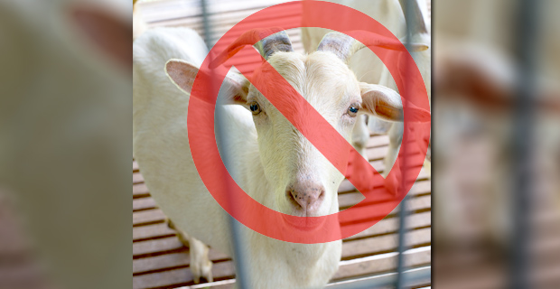 City Declares Goats Illegal