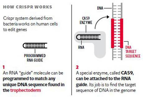 IVF Embryos to be Genetically Manipulated as Scientists Investigate Repeated Miscarriages