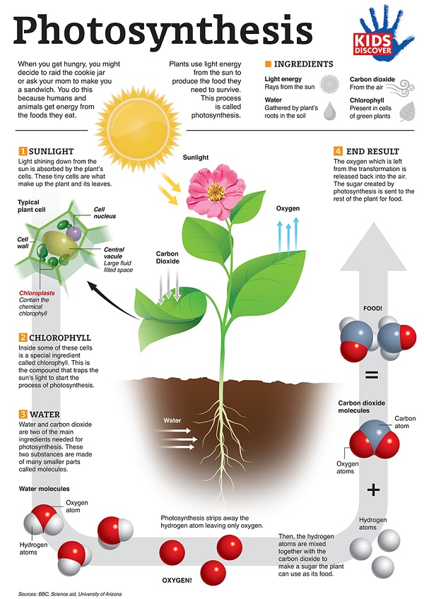 Environmentalists Declare War on Photosynthesis in Stupefying Effort to Exterminate All Recognizable Life on Planet Earth