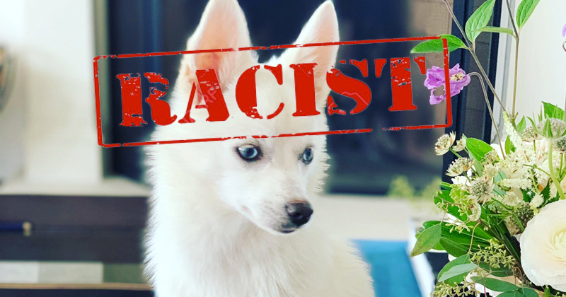 'Does it sieg heil yet?: Leftists Call Ivanka Trump Racist Over Picture of White Dog