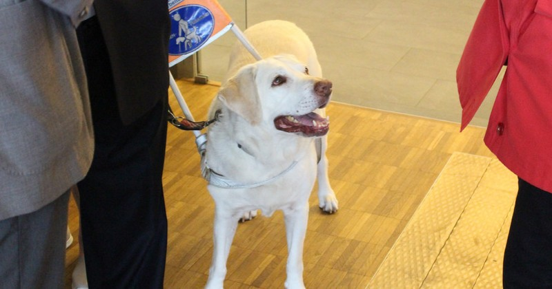 Austria: Muslim Taxi Drivers Refuse to Transport Guide Dogs For the Blind