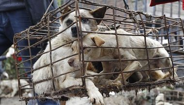 Ban On Eating Dogs & Cats Blocked in the UK Because it Might Offend East Asians