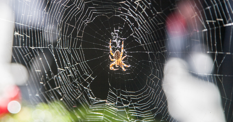 Combination of Wood Fibers, Spider Silk to Rival Plastic