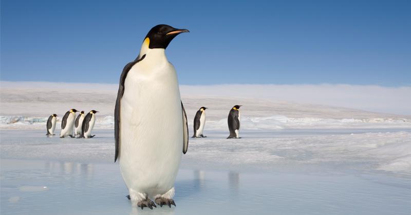 "The Bogus ""Consensus"" Argument on Climate Change"