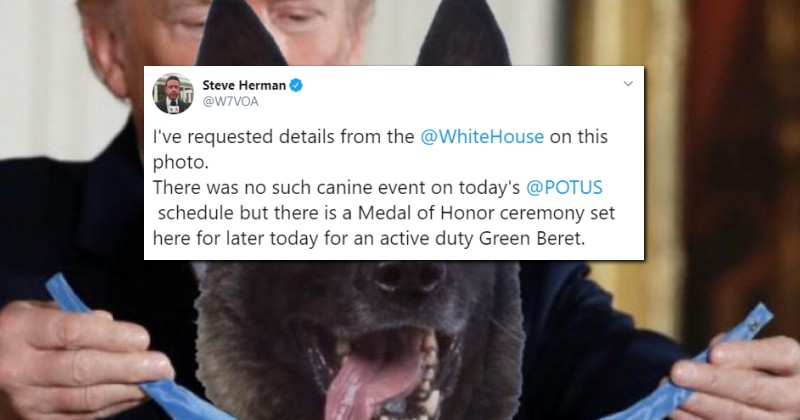 Journalists FREAK OUT Over Meme of Trump Giving 'Hero Dog' a Medal