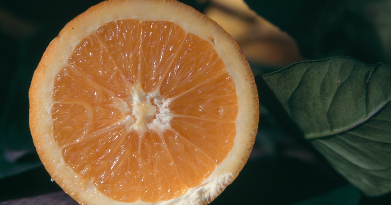 Vitamin C Linked to Better Survival Rates After Sepsis