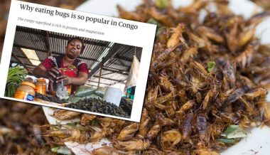 Globalist Magazine 'The Economist' Tells Plebs to Eat Bugs