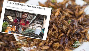 Globalist Magazine 'The Economist' Tells Plebs to Eat Bugs