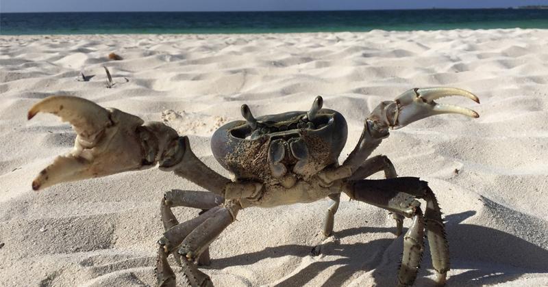 Scientists Using Crabs to Better Understand Alzheimer's