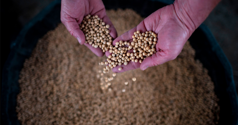 Not This Again: China Announces Waivers For Soybeans, Pork