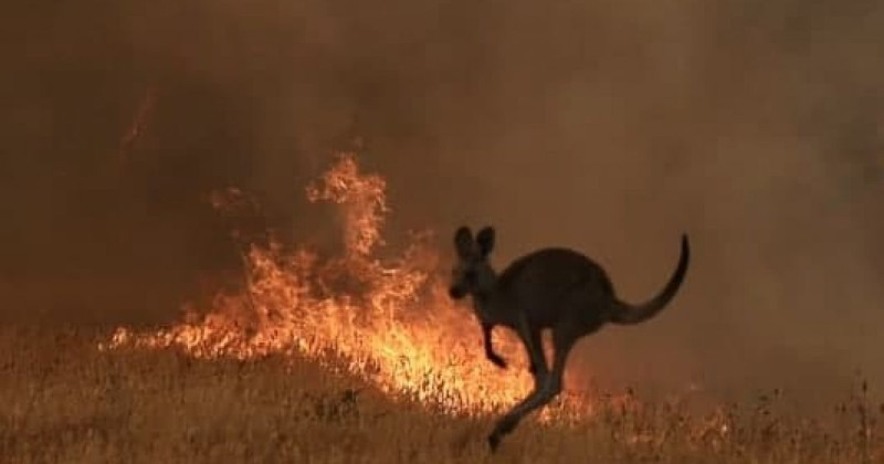 NEARLY 200 PEOPLE ARRESTED ACROSS AUSTRALIA FOR DELIBERATELY STARTING BUSHFIRES 060119bushfire