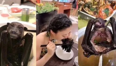 Videos Show Chinese People Eating Bats As Experts Link Animal to Coronavirus Outbreak