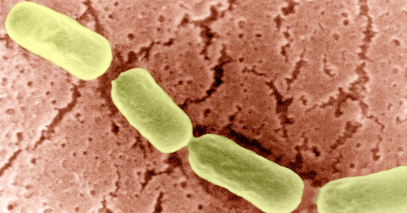 Researchers Using Liquid Metal to Fight Drug-Resistant Superbugs