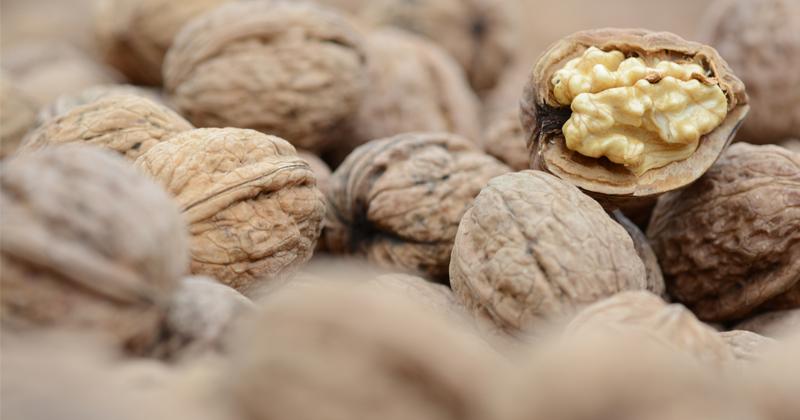 Study: Walnuts Improve Gut Health, Reduce Risk of Heart Disease