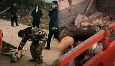 Report: Communist China Executing Pets To Stop Coronavirus