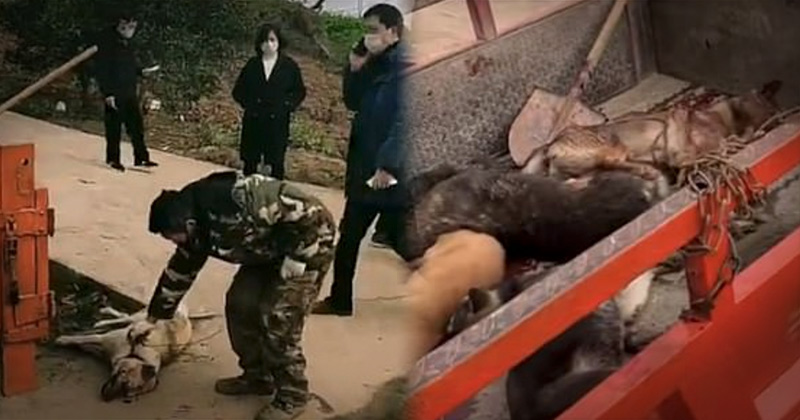 Report: Communist China Executing Pets To Stop Coronavirus