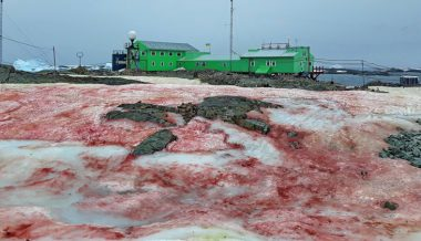 Red Snow Near Antarctic Base Baffles Netizens