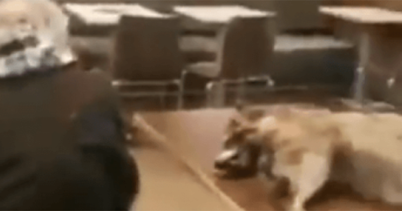 SHOCK VIDEO: Man sits with decaying raccoon in San Fran McDonald's