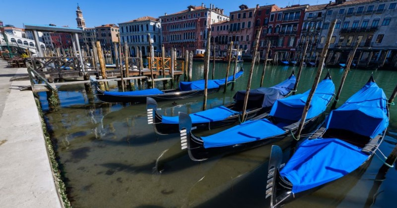 Blast From The Past: Italian Quarantine Brings Wildlife Back To Venice Canals