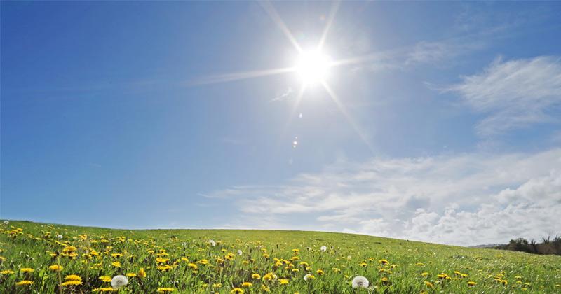 Natural sunscreen gene influences how we make vitamin D