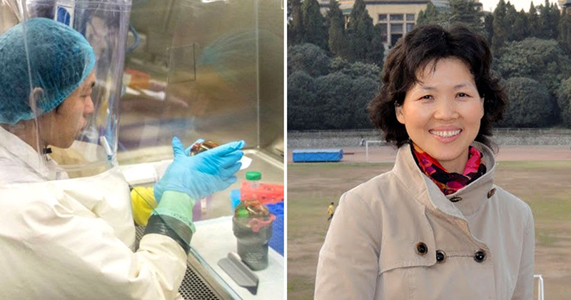 Curse of the 'Bat Woman' — what went on in Wuhan lab?