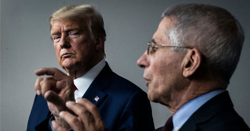 Trump Drops the Hammer on Fauci After Disturbing White House Briefings on Doctor's Past