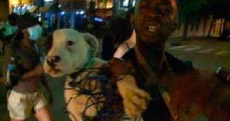 Outrage After Dog Seen Being Strangled by Rioter On Camera Found Dead