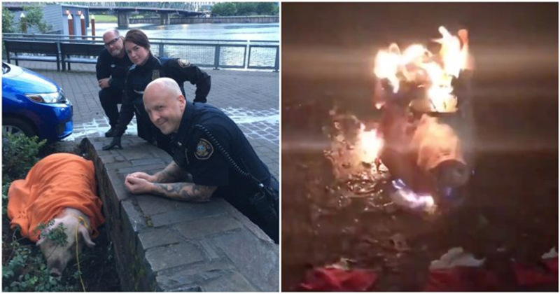 Police Rescued Pig From Portland Leftists Who Planned To Publicly Behead It In Protest